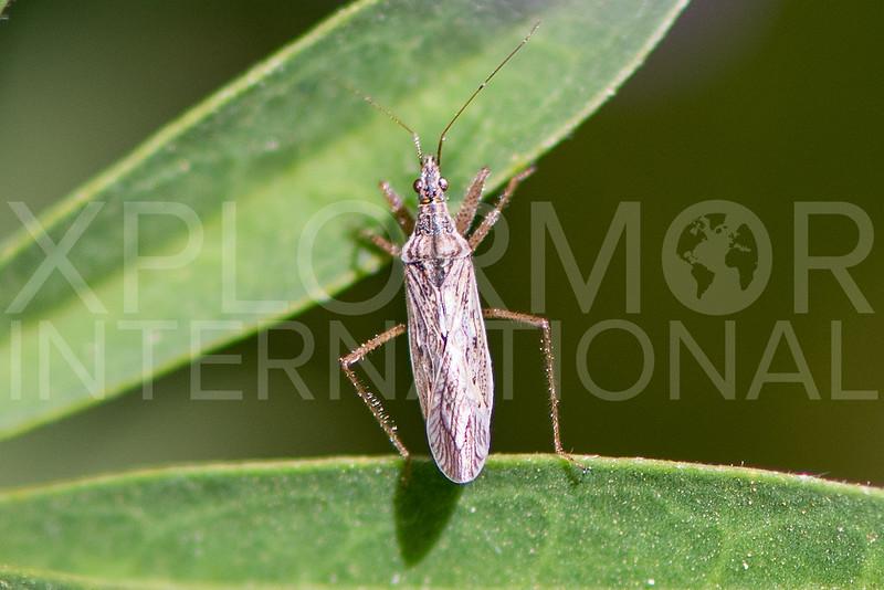 Damsel Bug - Need ID