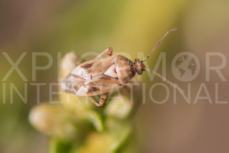 True Bug - Need ID