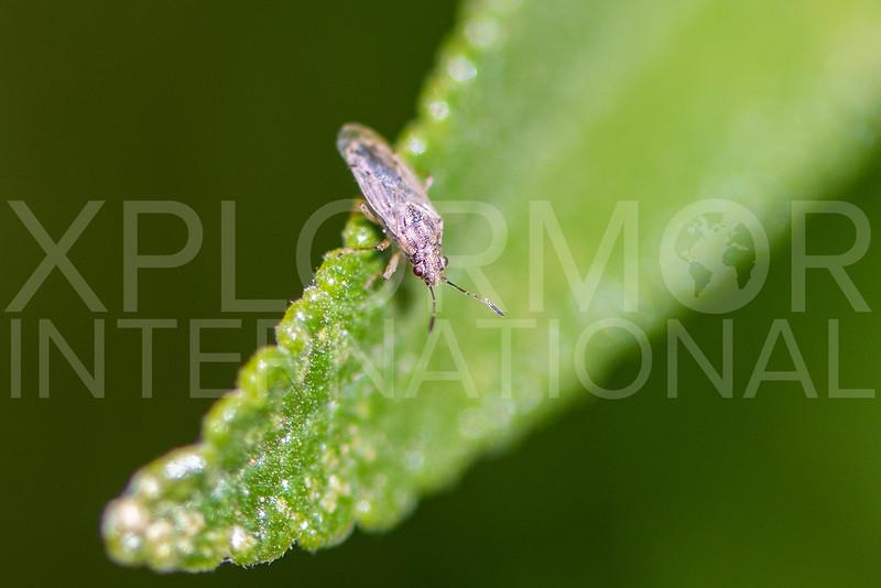 Seed Bug - Need ID