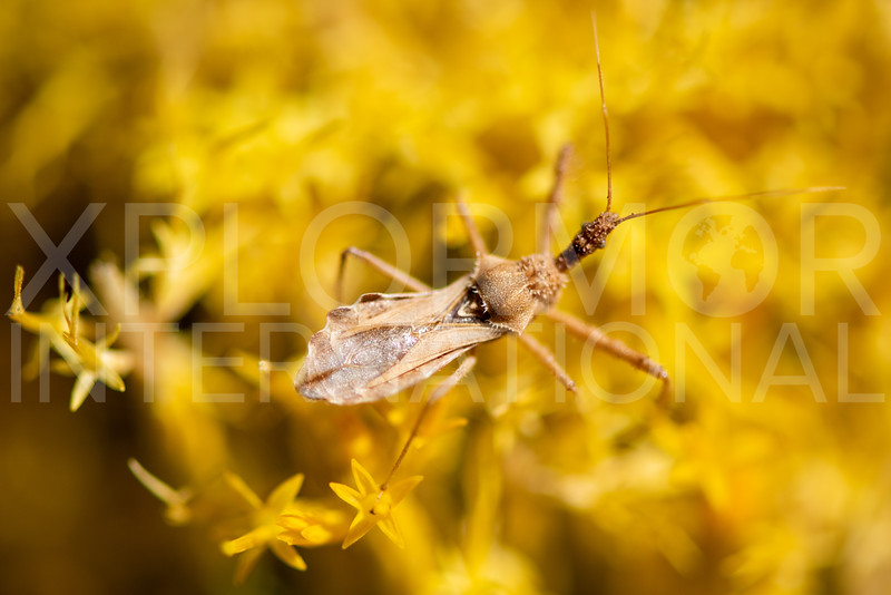Assassin Bug - Need ID