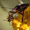 California Bee Assassin