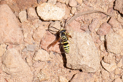 Wasp - Need ID