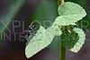 Black Mud-dauber Wasp