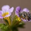 Mining Bee - Need ID