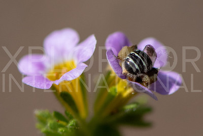 Mining Bee - Need ID