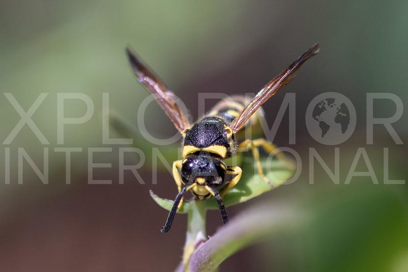 Wasp - Need ID