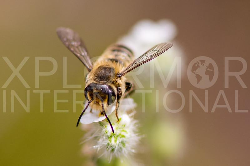 Bee - Need ID