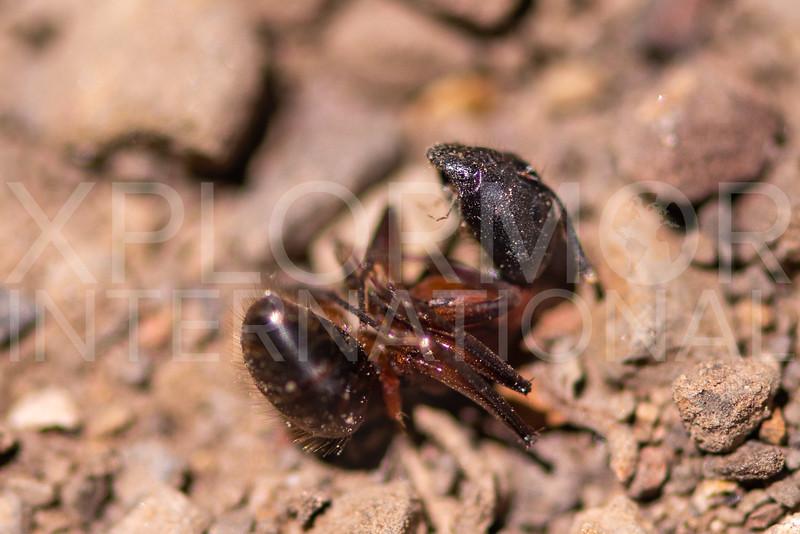 Ant - Need ID