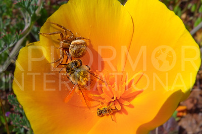 Honey Bee and Spider