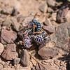 Mining Bees - Need ID