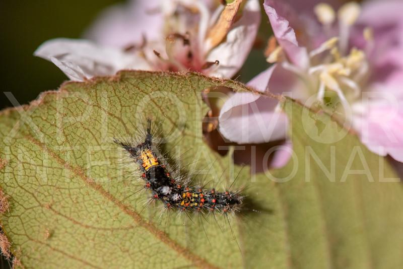Caterpillar - Need ID