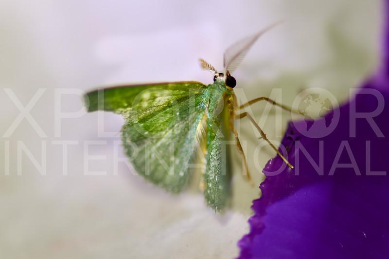 Emerald Moth - Need ID