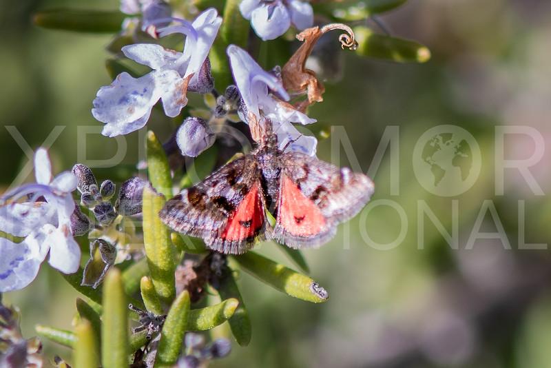 Crambid Snout Moth