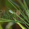 Green Lacewing - Need ID