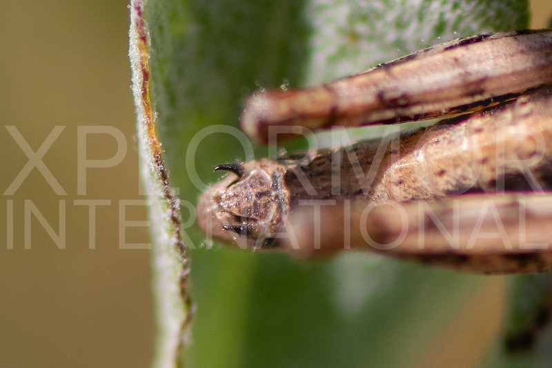 Grasshopper - Need ID