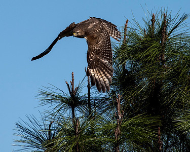 Migrating Birds 2015-2016