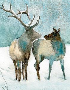 Elk Duo