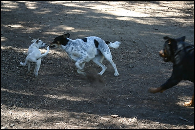 Dogs playing at Stampede Campgrounds