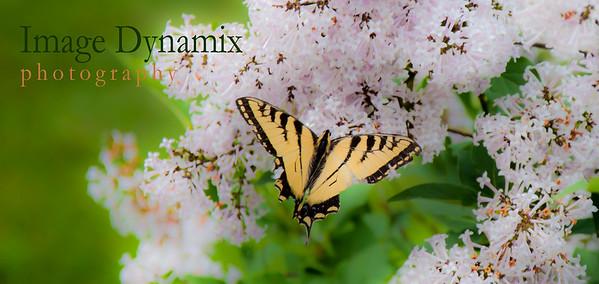 Image Dynamix