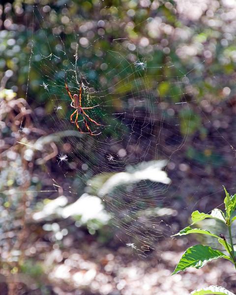 Arachnid_01