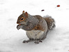 Squirrel with Almond
