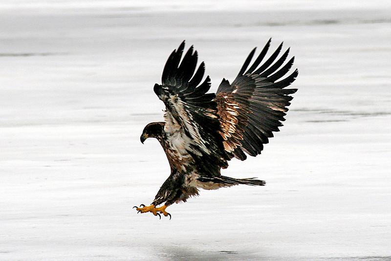 landing on ice,