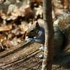 Squirrel<br /> 4/5/10