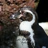 penguin<br /> 2007
