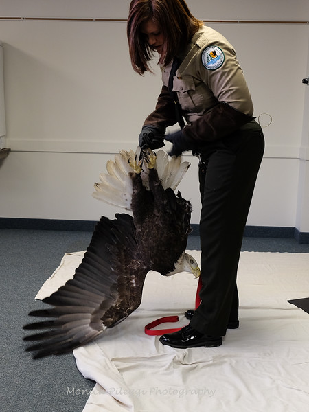 Mo got a little excited and tried to fly off. The handler righted her immediately.