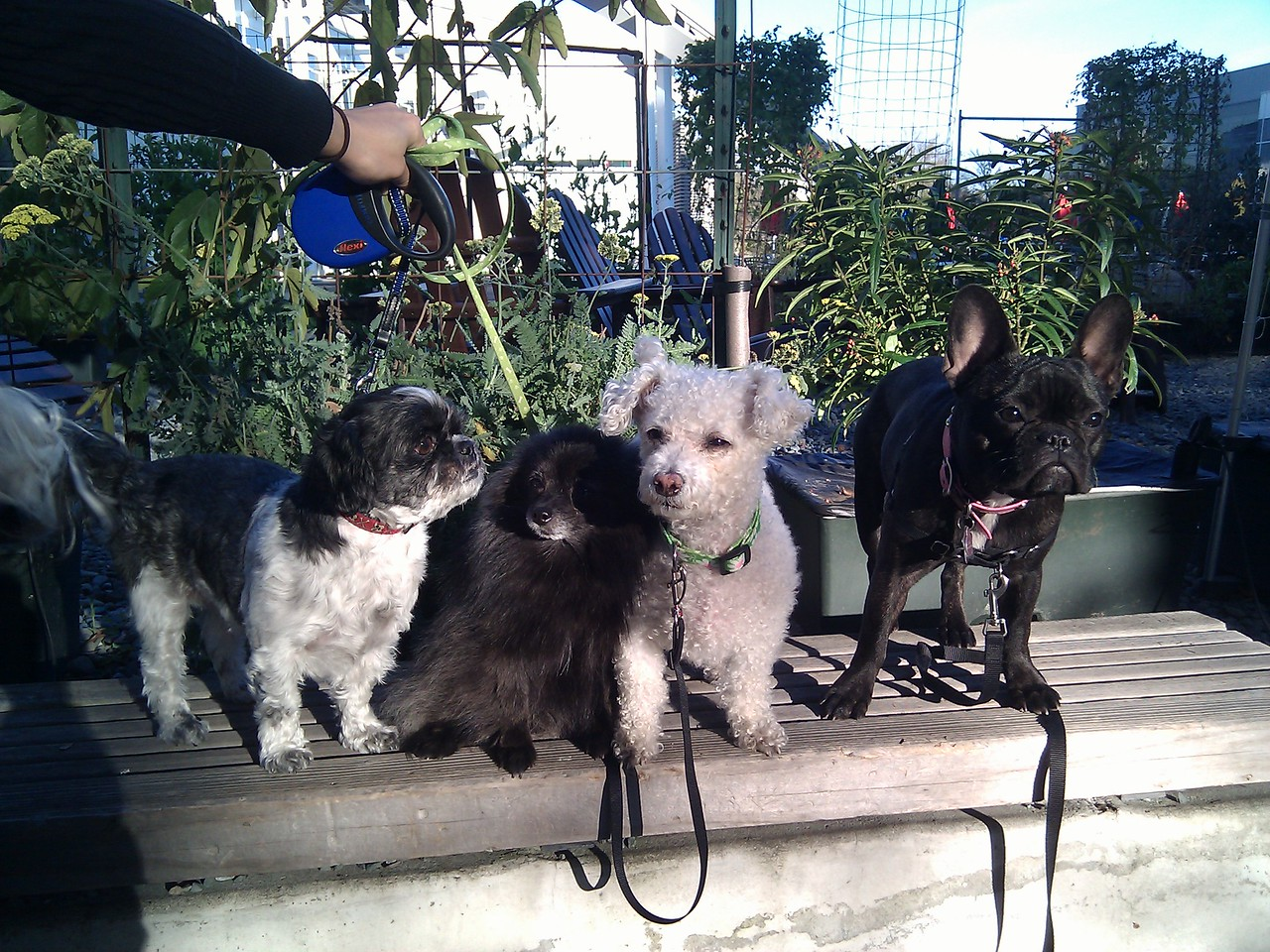 Google dogs: Snap, Mochi, Senna, Lola. Mountain View, 2/3/11.