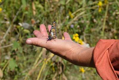 Monarch Tagging with CWI