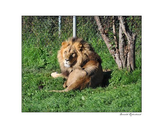 Moncton Zoo
