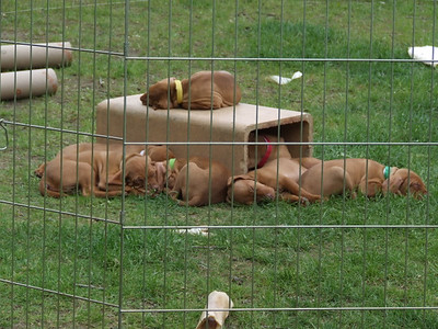 Monday May 26 Puppy pictures