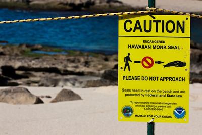 """Pohaku"" - Hawaiian Monk Seal (Endangered)"