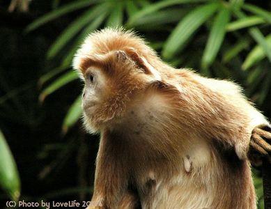 - Monkey s-
