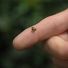 TIny snail.