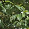 Hummingbird in a nest