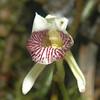 Flower in Monte Verde
