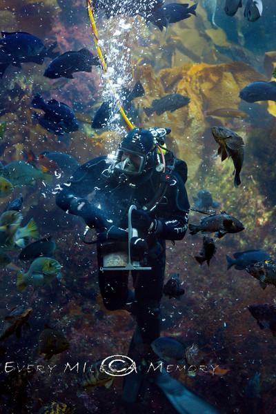 Feeding the Fishes at the Monterey Bay Aquarium - Photo by Pat Bonish