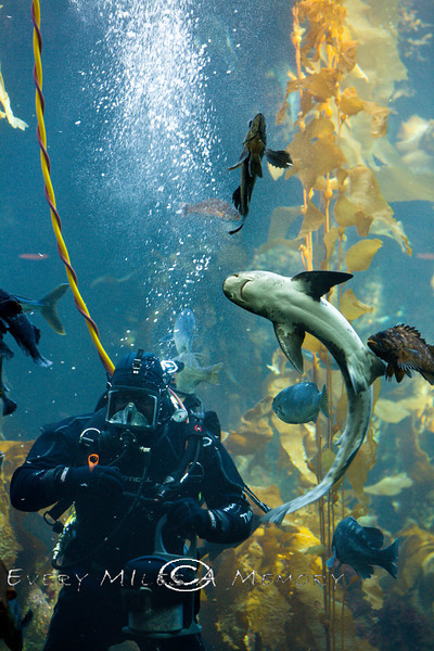 Scuba Diving at the Monterey Bay Aquarium - Photo by Pat Bonish