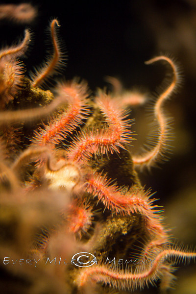 Creepy Crawly Sea Creatures at the Monterey Bay Aquarium - Photo by Pat Bonish