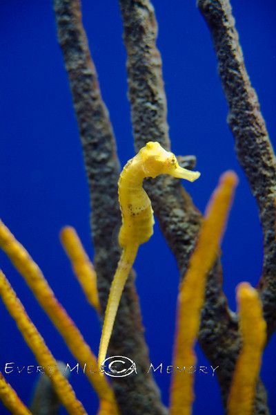 The Secret Lives of Sea Horses - Monterey Bay Aquarium - Photo by Pat Bonish