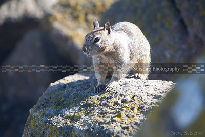 I thought it odd to see squirrels on the rocks on the beach.