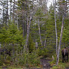 2 bull moose<br /> Errol, NH