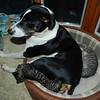 Rommel and kittens