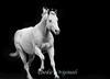 WhitehorseBlckBG1660FvBWsh12x14 copy