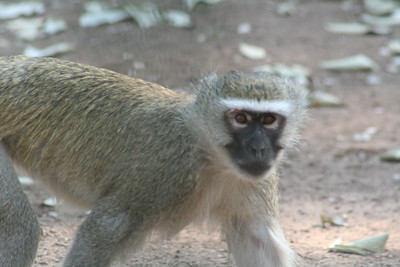 Mostly Monkey Business