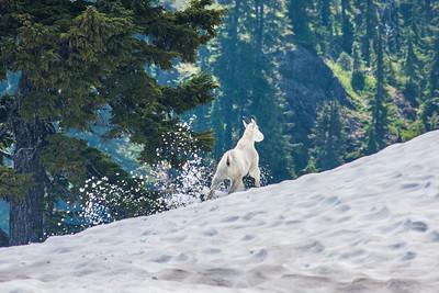 Mt Baker Snowy Escape