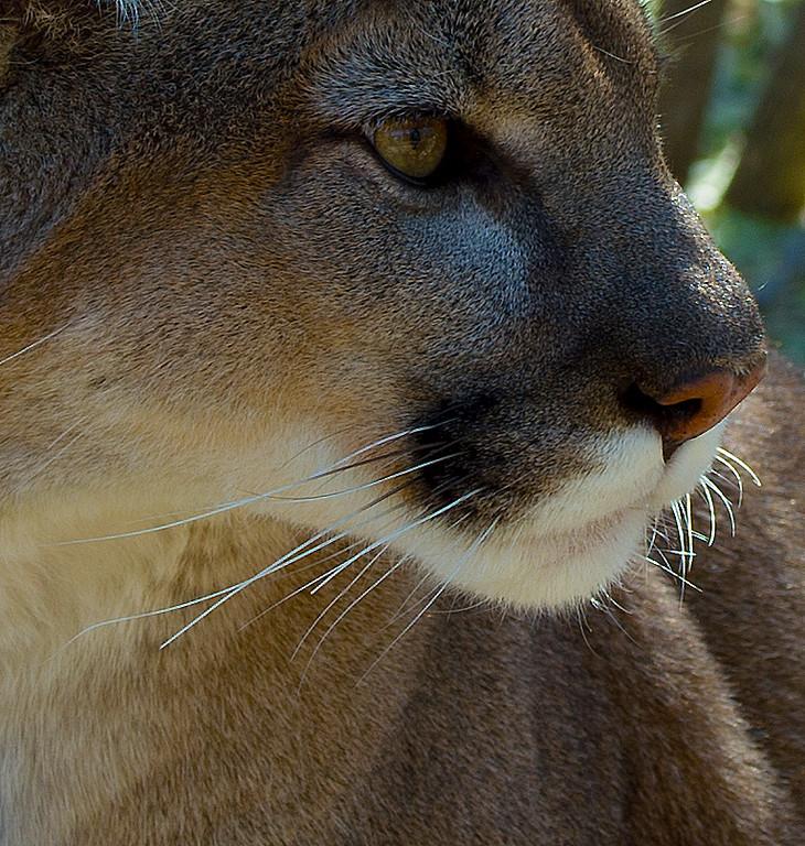 Heritage Park Zoological Sanctuary, Prescott, Arizona