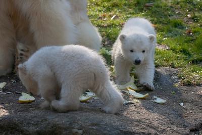 Munich Zoo's new babies April 2014